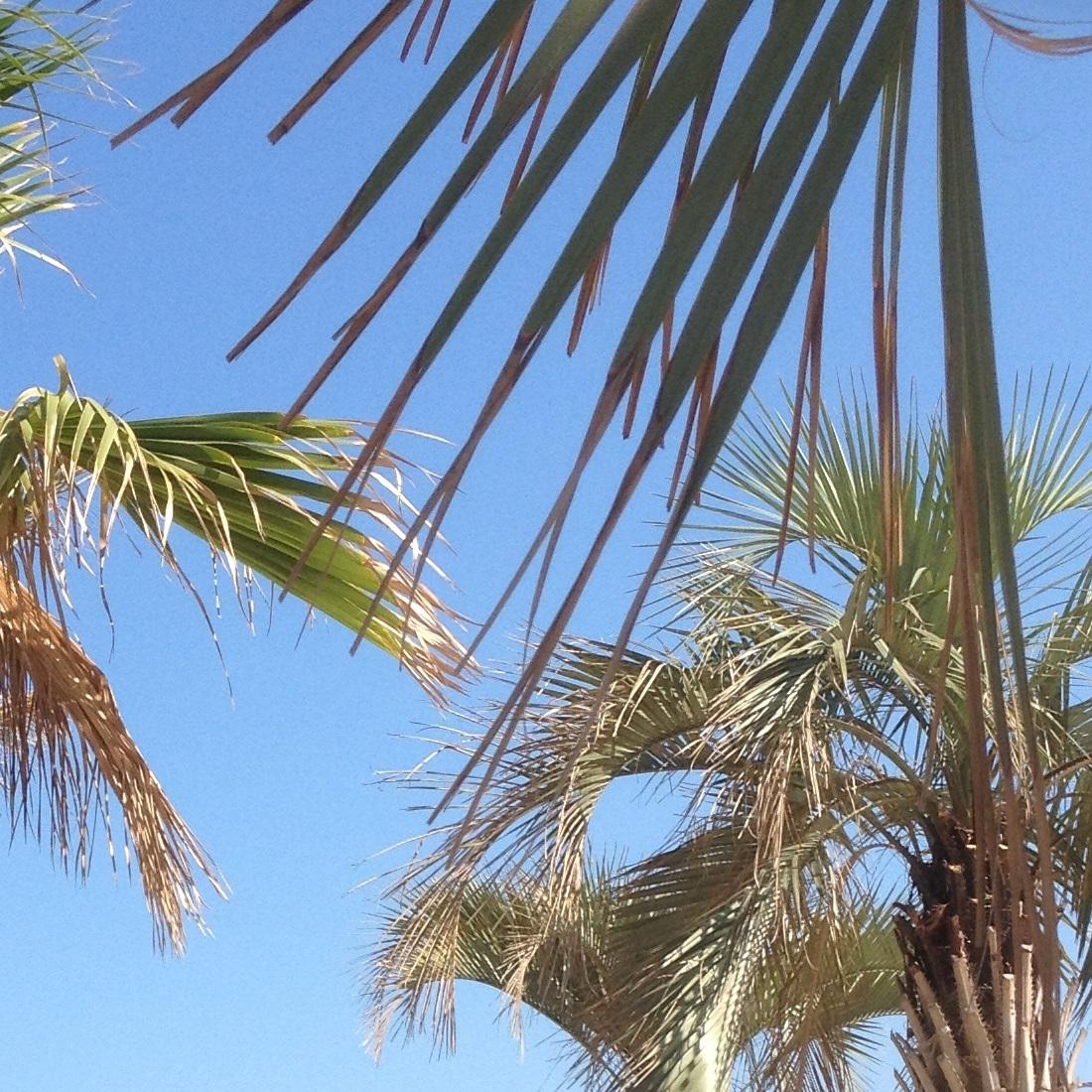 Soleil et palmiers